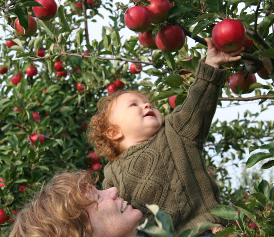 Apple Picking Near Me
